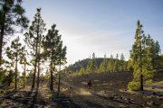 Hiking in Parque Nacional Teide