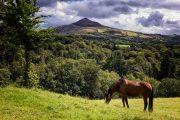 Grazing horse in front of the Sugarloaf Mountain, Wicklow