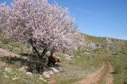 Hiking trail near Benaojan, CC El Pantera