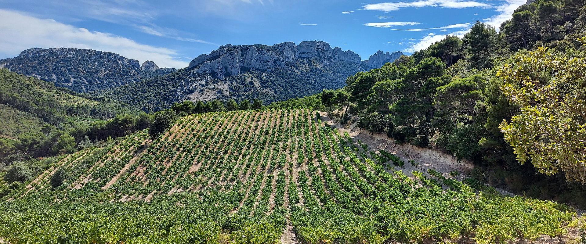 Walking & Wine in Provence
