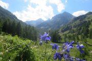 Alpes Maritimes