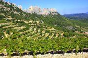 terrasserede vinmarker i Luberon
