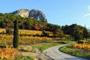 vin og vandring i Provence