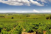 Chateuauneuf du Pape vinmarker