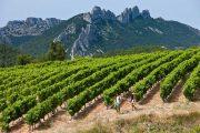 vin og vandring Chateaueneuf du Pape