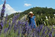 Walking in the lavender fields, Provence