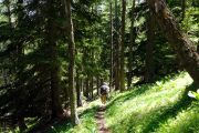 Woodland hiking path, Valle d'Aosta
