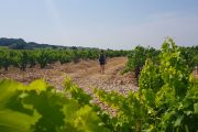 walking in Chateauneuf du Pape