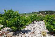 The famous vineyards of Chateaneuf du Pape