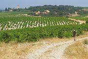 Hiking among the vineyards of Chateauneuf du Pape