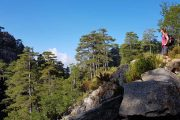 The Forêt d'Aïtone on the Mare a Mare path in Corsica