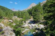 Mountain stream in the Niolu valley in Corsica