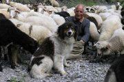 Rhodope mountains shepherd