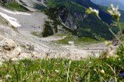 Alpine flowers on the Dachstein circuit