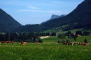 Bad Aussee alpine meadow