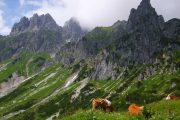 Cows grazing on the Dachstein