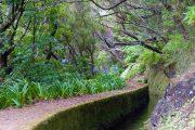 levada-vandring på Madeira