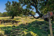 Verada do Fanal (Francisco Correia, Visit Madeira)