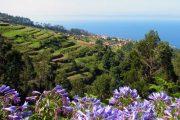 Madeira, flower island