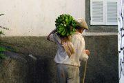 Local banana farmer in Madeira