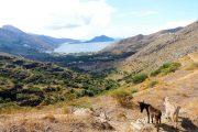 Cycladic islands donkeys