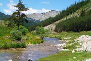 Mountain stream in Bulgaria's Rhodopes