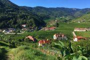 Wachau valley and vineyards, Spitz an der Donau