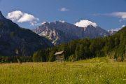 Alpine meadow in Slovenia's Julian Alps