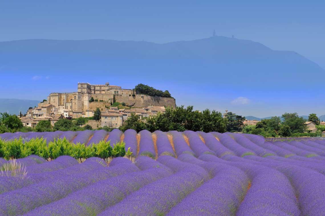 Ventoux & the lavender fields