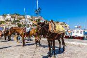 Donkeys at Hydra port