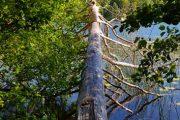 Fallen tree over Lake Slåensø