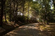 Woodland path on the Portuguese Way leaving Porto (c) Associacao de Turuismo de Porto e Norte