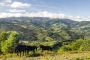 Horses in the mountains of the Basque country along the Camino del Norte