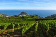 Vineyards in Getaria on the Camino del Norte