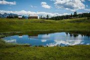 Tauplitz alpine meadow