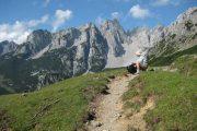 Hiking trail above Gosau