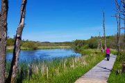 Hiking on a walkway over Gudenåen - Denmark's longest river