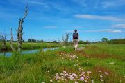 Hiking among sea thrift along Gudenåen on the Towpath