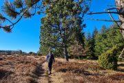 Hiking through the heathlands of Vrads Sande