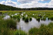 Beautiful bog landscpae on the Danish Camino