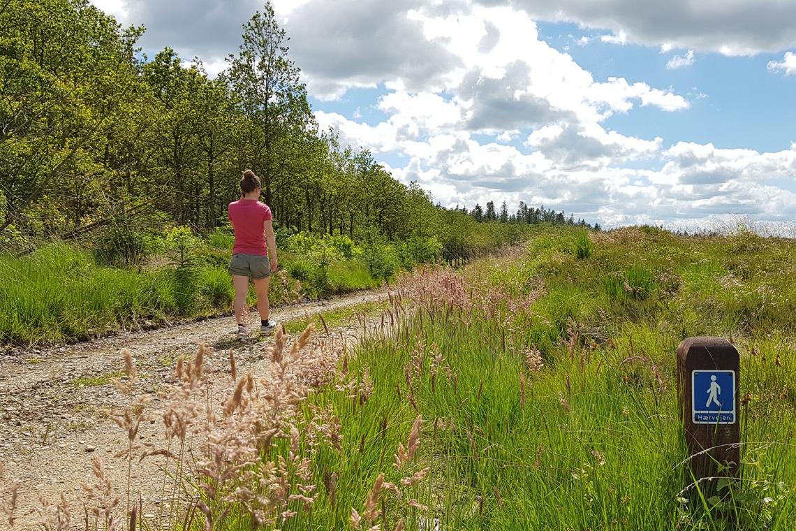Walking Denmark's Camino