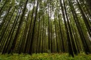 Palsgård Forest