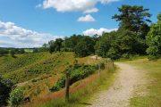 Hærvejen walking trail at Dollerup Bakker