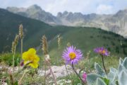 Pretty flowers in the Alpes Maritimes