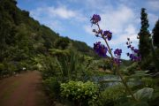 Tropical flowers and plants on Sao Miguel island