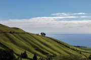 Terraces on Sao Miguel island in the Azores