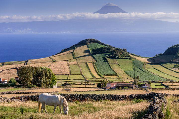 Azores, Pico island