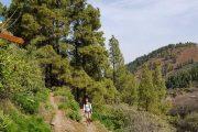 La Lechuza forest trail