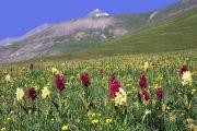 Mercantour alpine meadow
