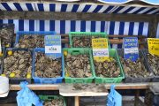 Fresh oysters in Cancale